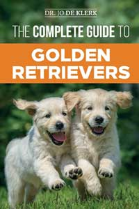Complete Guide To Golden Retrievers